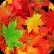 Leaf Live Wallpapers by anadolu111