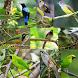 Kicau Burung Cucak Lengkap by Tidut app