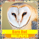 Barn Owl Birds Wallpaper by Tirtayasa Wallpaper