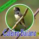 Cantos De Coleiro Baiano by PerothaDev