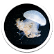 Water Jellyfish Live Wallpaper by Sub Nation