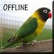 Suara Burung Lovebird Juara by Detarp Creative