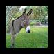 Donkey Wallpapers by Rose Danielsen