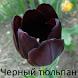 Черный тюльпан, Александр Дюма by Publish Digital Books