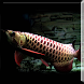 Dark Blue Arowana Fish LWP by sonisoft