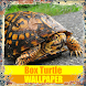Box Turtle Reptile Wallpaper by Tirtayasa Wallpaper