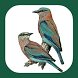 Birds of Europe & Palearctic by mydigitalearth.com