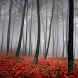 Autumn Nature Wallpapers by lad5mirs
