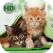 Wallpapers Cats - Nice Cats by mark app
