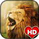 Lion Wallpapers and Background by Ash Tech Apps