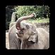 Elephant Wallpapers by Rose Danielsen