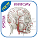 Human Anatomy - Atlas by SEStudio