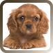 Pet Sitter: The Pet Manager by Tamilan Apps