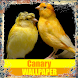 Canary Birds Wallpaper