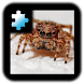 Jigsaw Puzzle: Spider by CoCoPaPa Soft