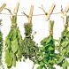 Лечебные травы и растения by KomfortStudio