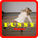 Super Funny Videos by funappsnew