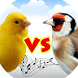 Canary vs goldfinch by APPS & GAMES