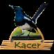Kicau Kacer Offline Om by Tigabelas Corp