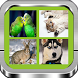 Game for kids: Learn animals by fedorovmiwa