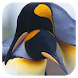 Penguins 3D. Live Wallpaper by tbem