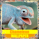 Chameleon Reptile Wallpaper