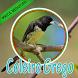 Cantos De Coleiro Grego by PerothaDev