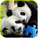 Panda Jigsaw Puzzle by The Best Puzzles