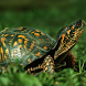 Reptiles Wallpapers by artur