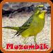 Kicau Burung Mozambik by Pram App