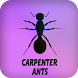 Carpenter Ants by Blackcup