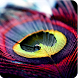 Beautiful Feather Theme by Best Themes Workshop