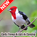 Cantos Femea Galo De Campina Naturale Mp3 by AnitaAnitolDev