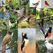 Kicau-Kicau Burung Terlengkap by Tidut app