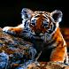Sad Baby Tiger LWP by Daksh Apps