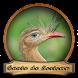 Canto Seriema Passaros Brasil by Silalahi App