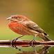 Lovely bird Live Wallpaper by Daksh Apps