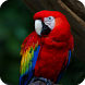 Parrot Bird Live Wallpaper by LwpMaster