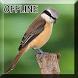 Burung Cendet Juara Gacor Mp3 by Detarp Creative