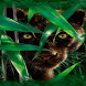 Forest Panther Live Wallpaper by Daksh Apps