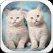 Cute Kitten Theme by Echo Keyboard Theme