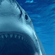 moving shark wallpaper by cool backgrounds moving llc