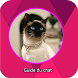 Guide chat Siamois Siamese Cat