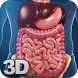 Digestive System Anatomy by visual 3d science