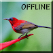 Kicau Kolibri Gacor lengkap by Detarp Creative