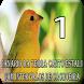 Canário da terra TURBINA by Raja Burung App