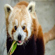 Panda plop