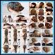 hair braiding tutorials by FerdApp