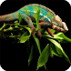 Chameleon Wallpaper by Empire Wallpapers