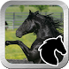 Black beauty horse jump by Appcodemarket